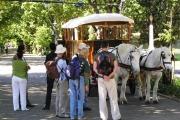 carriage-in-companys-garden