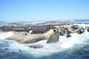 seals-on-island