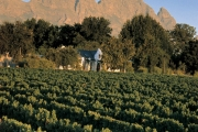 simonsig-vineyards